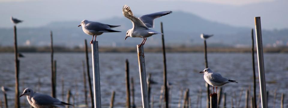Aves en estacas